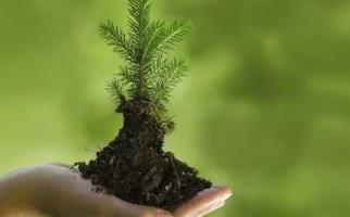 Сажайте деревья и кустарники