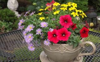 цветники на даче